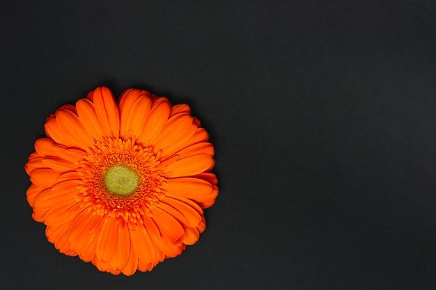暗いテーブルの上のオレンジ色のガーベラの花
