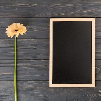 Orange gerbera flower with blank chalkboard on table