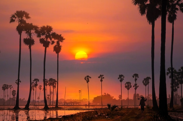 Orange gradient morning sky with tall palm trees silhouettes background