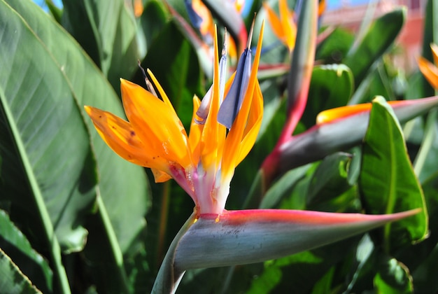 Orange and green flowers