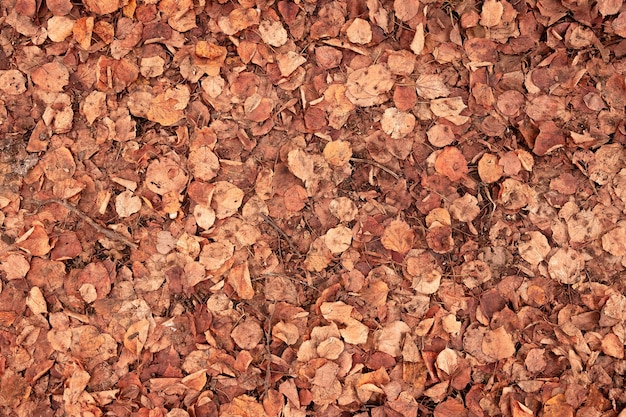 Orange grunge background of old fallen linden leaves