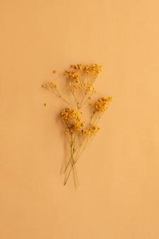 柔らかいクリーミーな茶色の背景にオレンジ色のカスミソウの枝