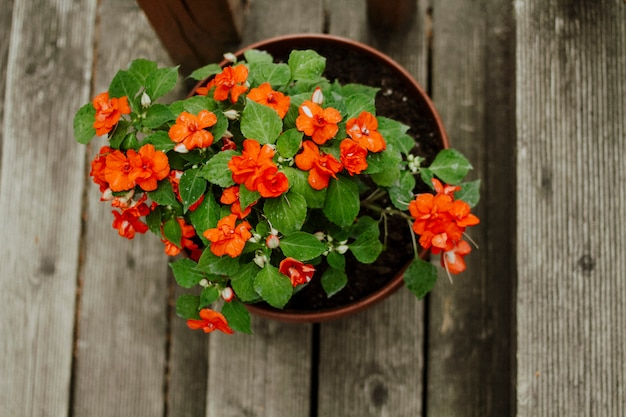Orange home flower potted on the stairs