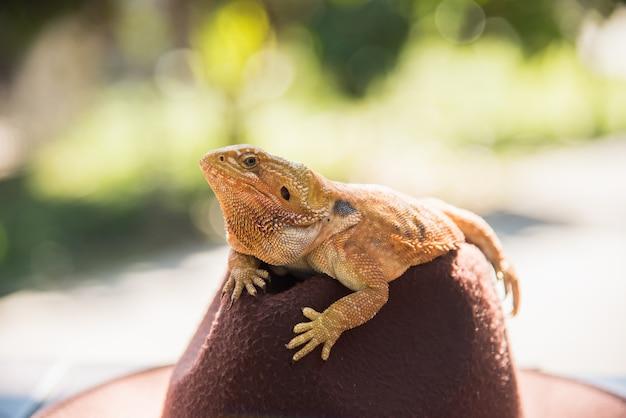 Orange iguana on hat