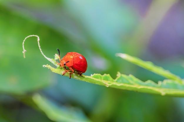 Orange ladybug on the blurred background