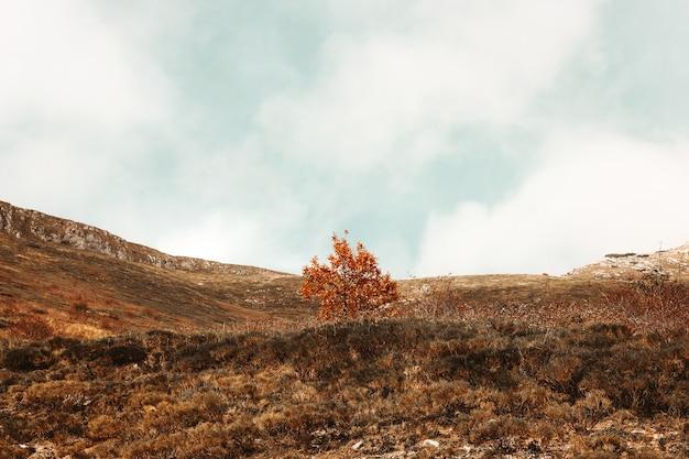 空き地中央のオレンジの葉の木