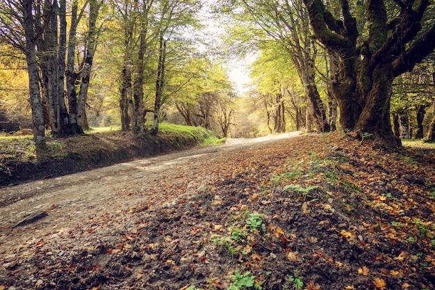 Оранжевые листья на земле в лесу. понятие осени и осени