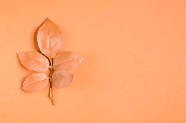 Orange leaves on orange background with copy space