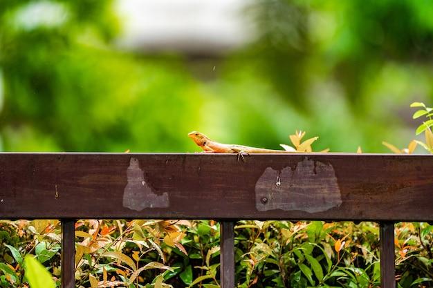 녹색 배경이 흐릿한 떨어지는 빗속에서 강철 울타리에 있는 주황색 도마뱀.