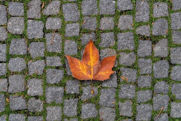 Оранжевый кленовый лист лежит на брусчатке. осень в городе