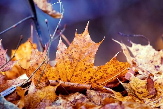 Оранжевый кленовый лист на земле на темном размытом фоне