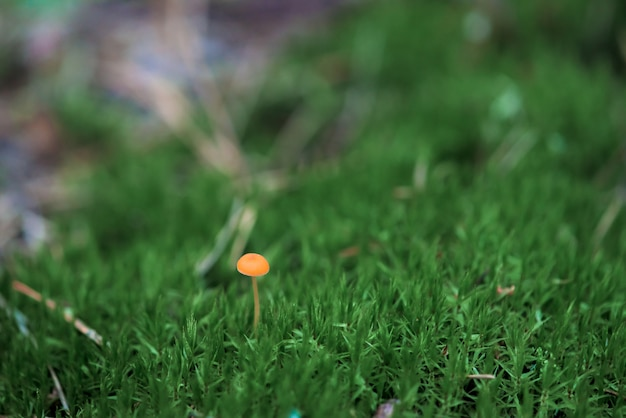 Orange mushroom on green moss