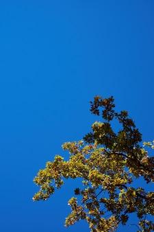 맑고 푸른 하늘에 대 한 오렌지 떡갈 나무 잎