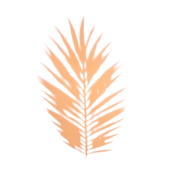 An orange palm leaf on white backdrop