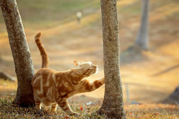 Orange pattern fur of male cat on beautiful light field