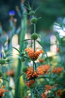 オレンジ色の花びらの花が咲く