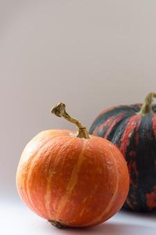 白のオレンジ色のカボチャ秋の構成