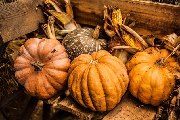 Orange pumpkin in the hay. autumn. harvest.