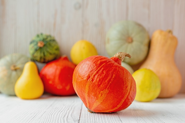 Orange pumpkin pumpkins in front of white wooden wall rustic style copy space