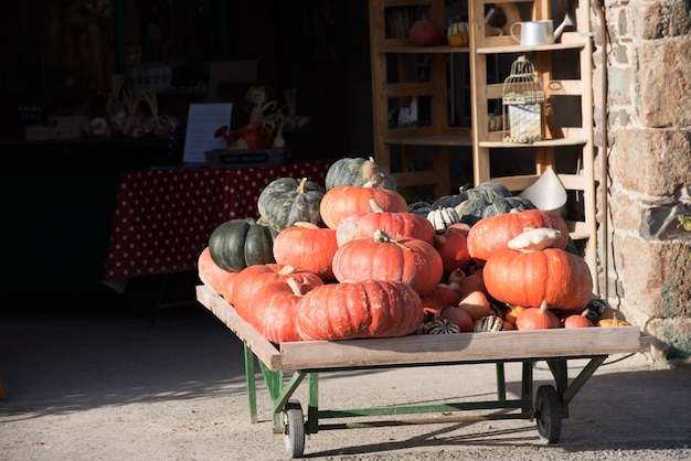 Orange pumpkins as a decoration. shot with selective focus