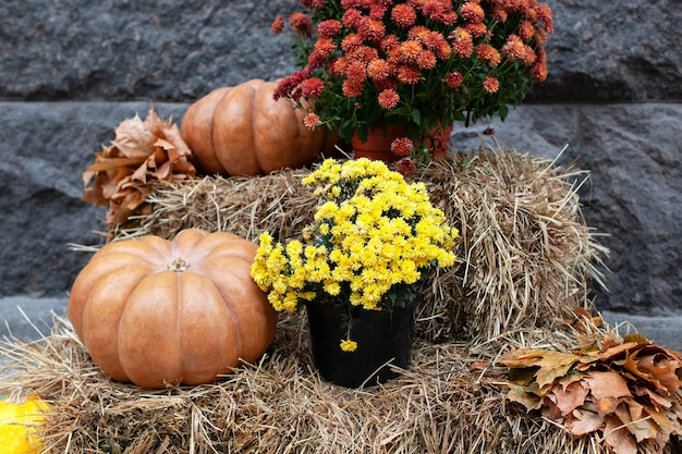 Orange pumpkins and chrysanthemums on straw bales. halloween decor yard. coze autumn decor terrace.