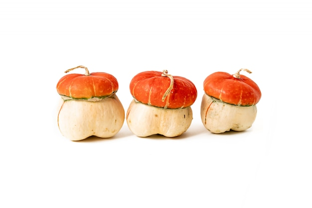 Orange pumpkins. fall autumn concept.