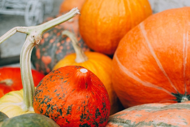 オレンジ色のカボチャ。収穫と秋のコンセプト