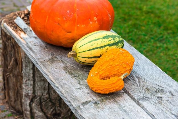 Оранжевые тыквы на деревянной скамейке.