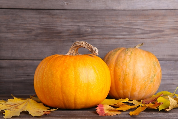 Orange pumpkins with leaves on a grey background.