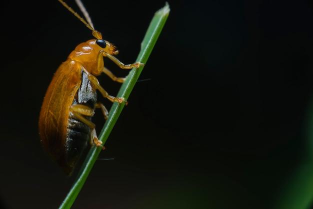 緑の葉をつかむ美しい色のオレンジ色の赤いカブトムシ