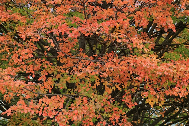 Orange red color fall foliage in the los glaciares national park, patagonia, argentina