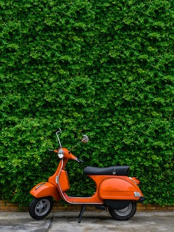Orange retro scooter parked on street side with green leaves wall.