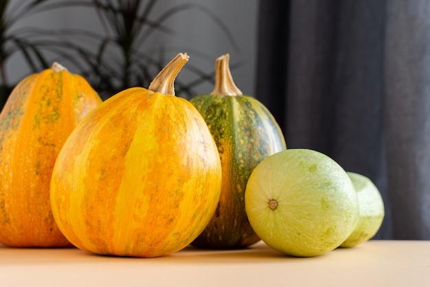 Созревшие в апельсине тыквы и цуккини крупным планом, свежие органические овощи из сада