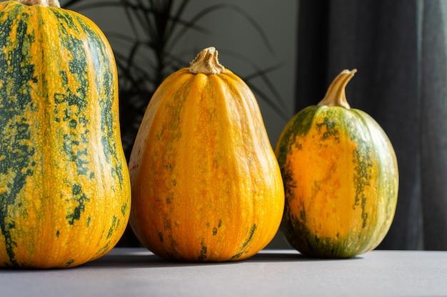 Orange ripened pumpkins closeup, fresh organic vegetables from the garden