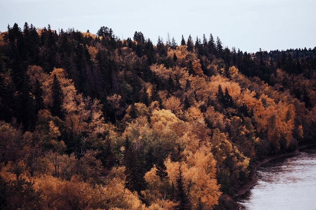 Riva del fiume arancione