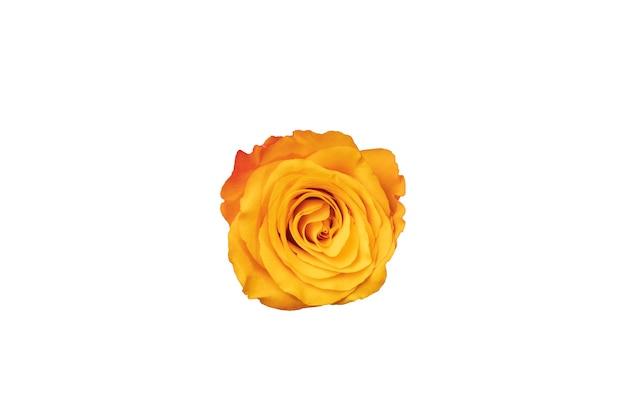 オレンジ色のバラのつぼみは、白い背景で隔離。デザインのための美しい花。上からの眺め。高品質の写真