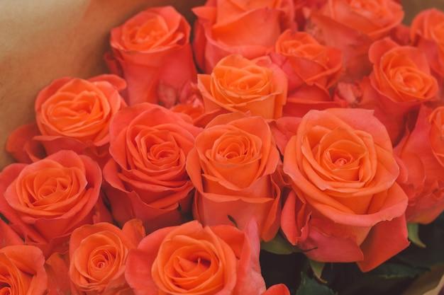 Orange rose flower buds