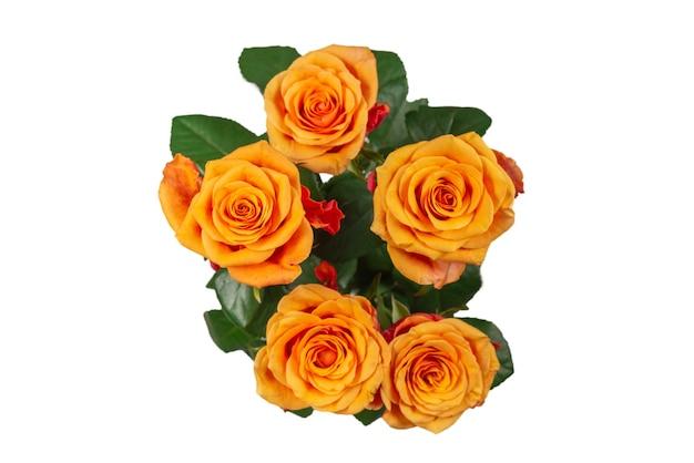 白い表面に孤立したオレンジ色のバラ。上面図。