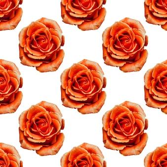 白い背景に分離されたオレンジ色のバラ。シームレスなパターン。高品質の写真
