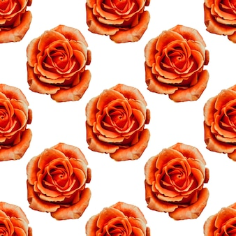 Orange roses isolated on a white background. seamless pattern. high quality photo