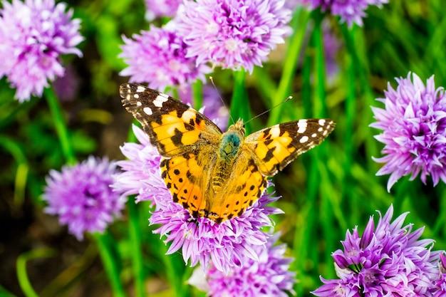 晴天時の紫の花にオレンジ色の斑点のある蝶_