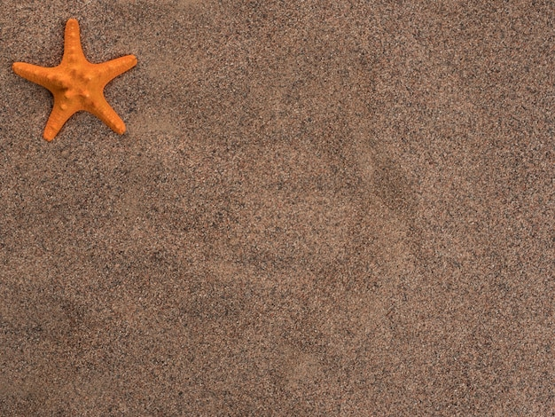 An orange starfish lies on the coarse sand, top view. copy space.