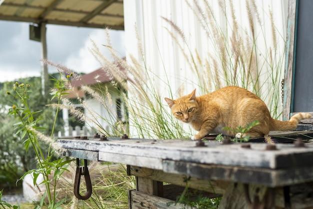 オレンジ色の野良猫は人々に畏敬の念を抱いています。 Premium写真
