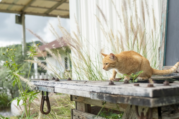 オレンジ色の野良猫は人々に畏敬の念を抱いています。