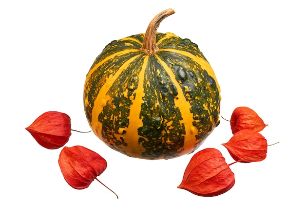 Orange striped pumpkin and red physalis on a white background. autumn concept