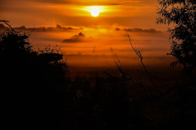 森の中の霧とオレンジ色の日の出。夜明けの木のシルエット