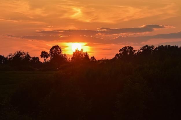 森林公園に沈む夕日、オレンジ色の空