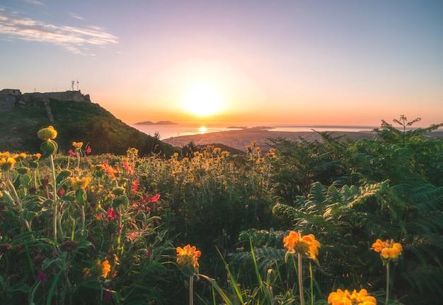 전경에 꽃으로 덮인 언덕 경사면과 아드리아 해의 오렌지색 일몰