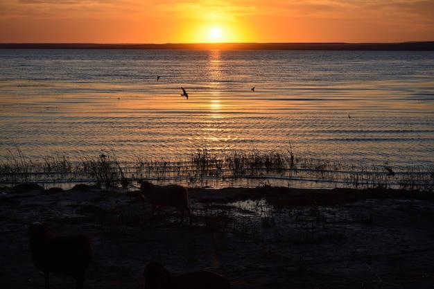 ヴォルガ川に沈むオレンジ色の夕日