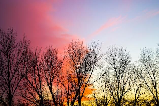 나무 실루엣과 오렌지 일몰 하늘